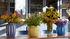 Juice Vase / Niedrig - Ø 22 x H 22 cm - Hay
