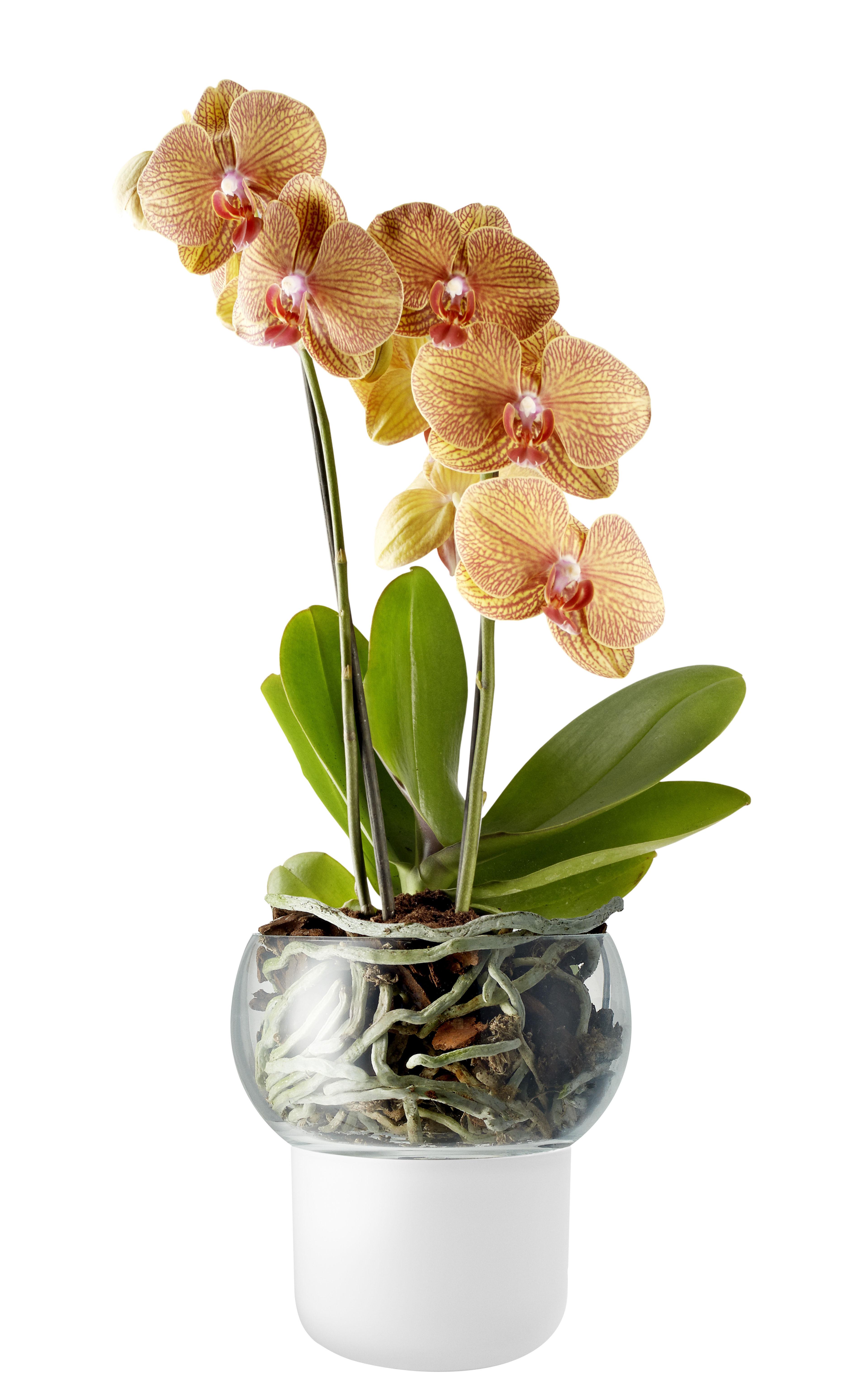 Interni - Vasi e Piante - Vaso da fiori con riserva d'acqua Small Ø 13 cm / Per orchidee - Eva Solo - Small Ø 13 cm / Bianco - Vetro acidato, Vetro soffiato a bocca